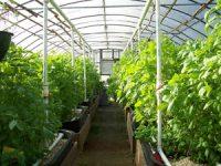 Для растениеводческих хозяйств